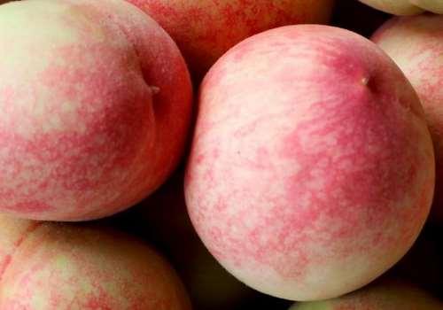 吃桃子会胀气吗 桃子吃多了会肚子疼吗