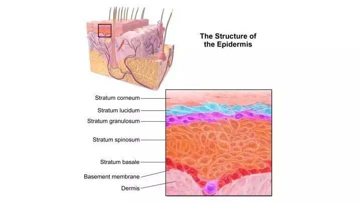 敷眼膜的正确步骤和护肤_男士抹护肤品步骤