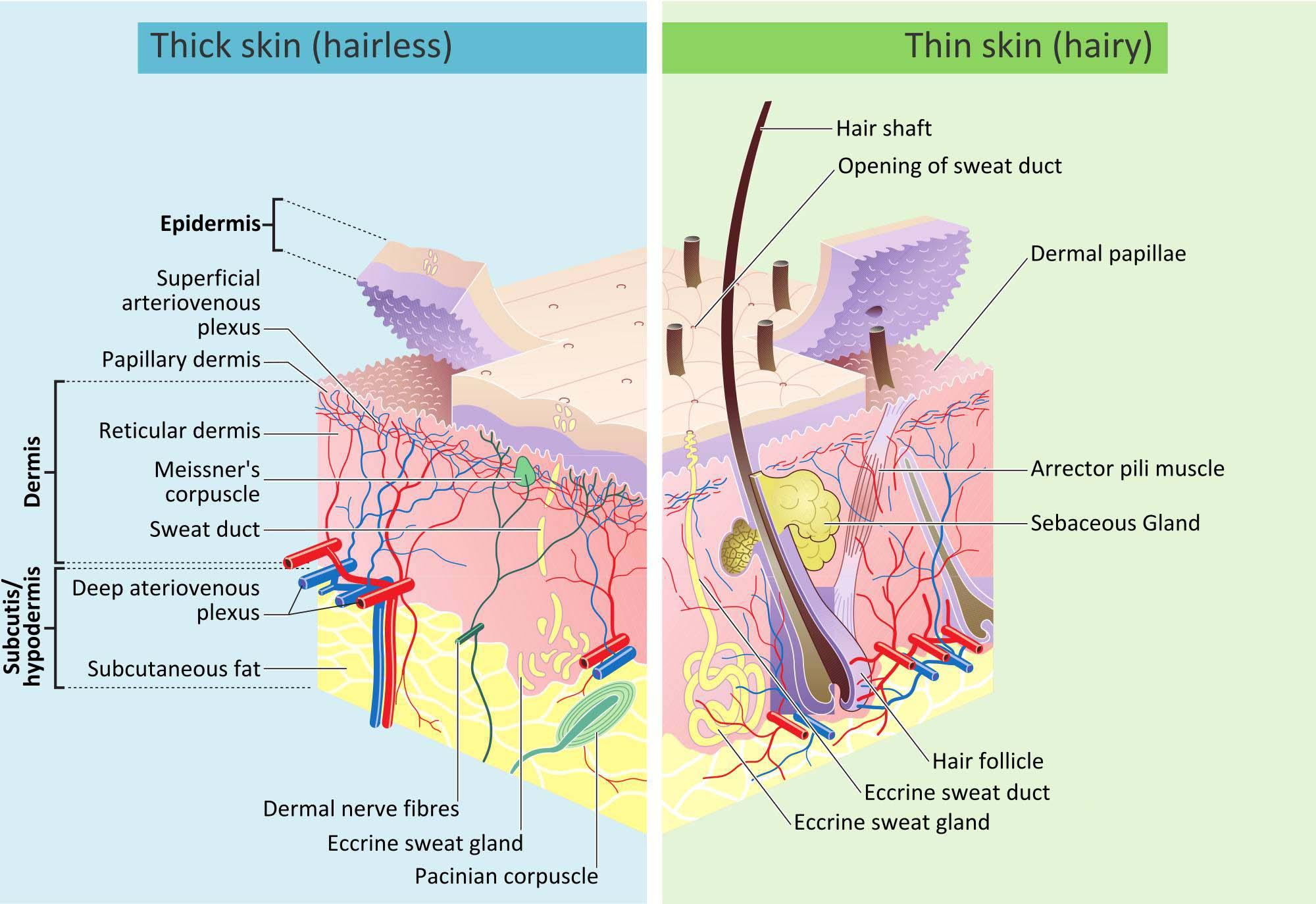 每天必须护肤正确步骤_不化妆基本日常护肤步骤