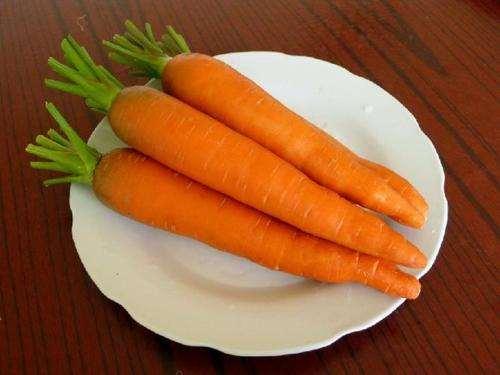 胡萝卜长白色须是怎么回事 胡萝卜长白色须还能吃吗